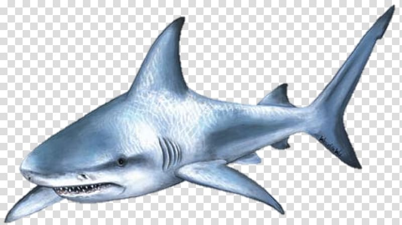 Shark with towel and hat clipart picture transparent stock Shark attack png picture transparent stock