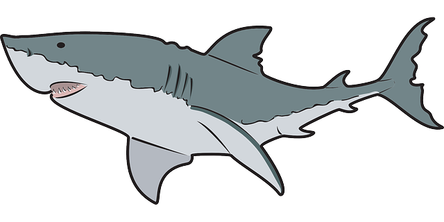 Sharks free clipart free library Free Free Shark Cliparts, Download Free Clip Art, Free Clip ... free library