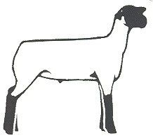 Sheep showing clipart black and white download Hampshire show sheep clipart - ClipartFest black and white download