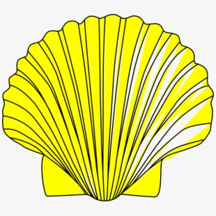 Shell clipart image