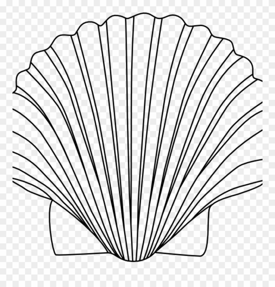 Shell clipart image banner library download Shell Clipart 15 Shells Clipart Black And White For - Sea ... banner library download