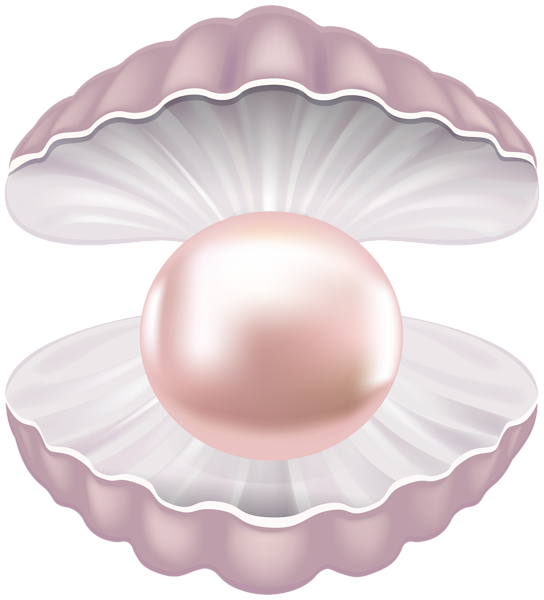 Shell heart clipart clipart royalty free Pearl Shell Transparent PNG Clip Art Image   Gallery Yopriceville ... clipart royalty free