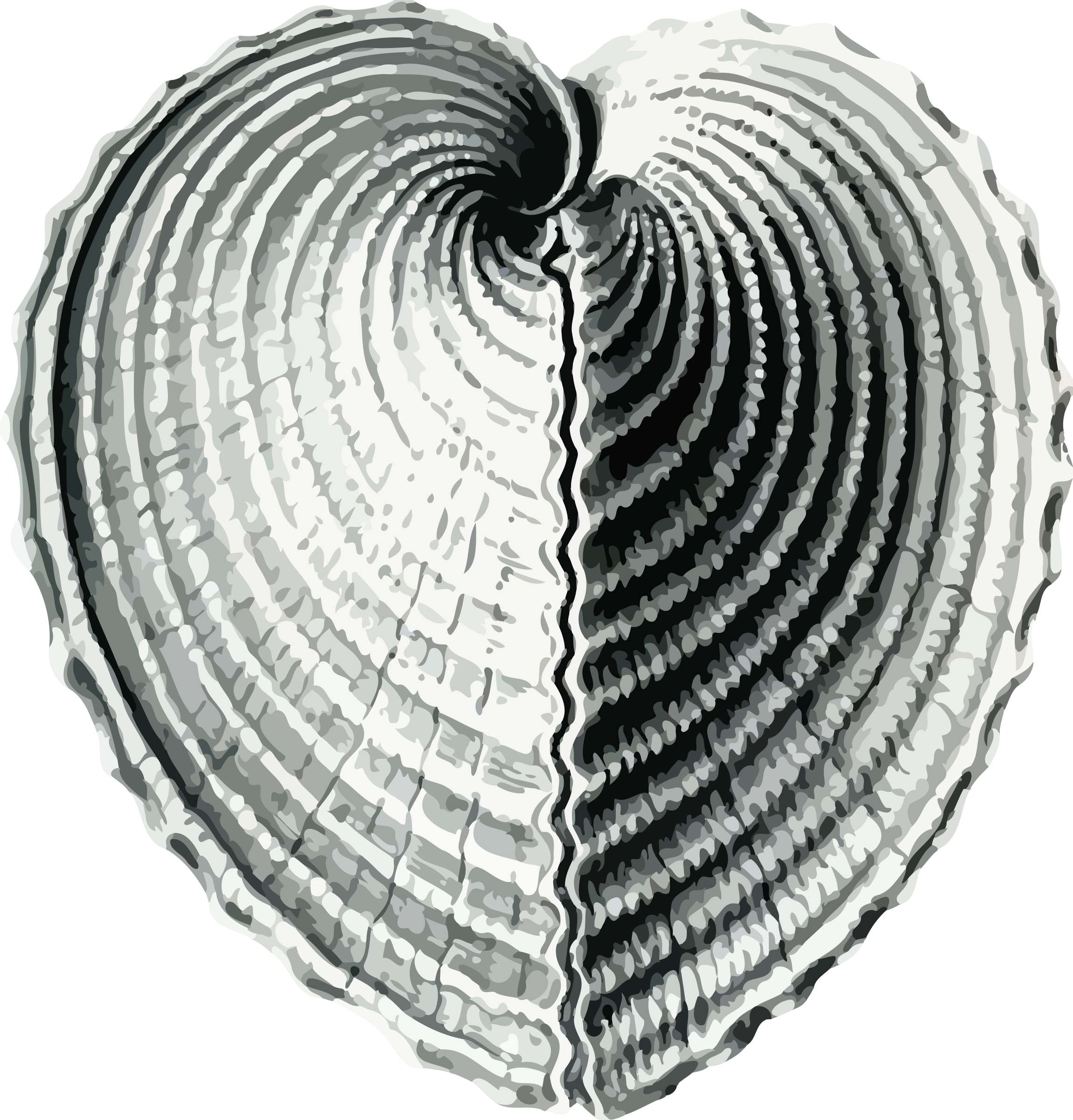 Shell heart clipart clip art black and white download Clipart - Bivalve 1 - heart cockle clip art black and white download