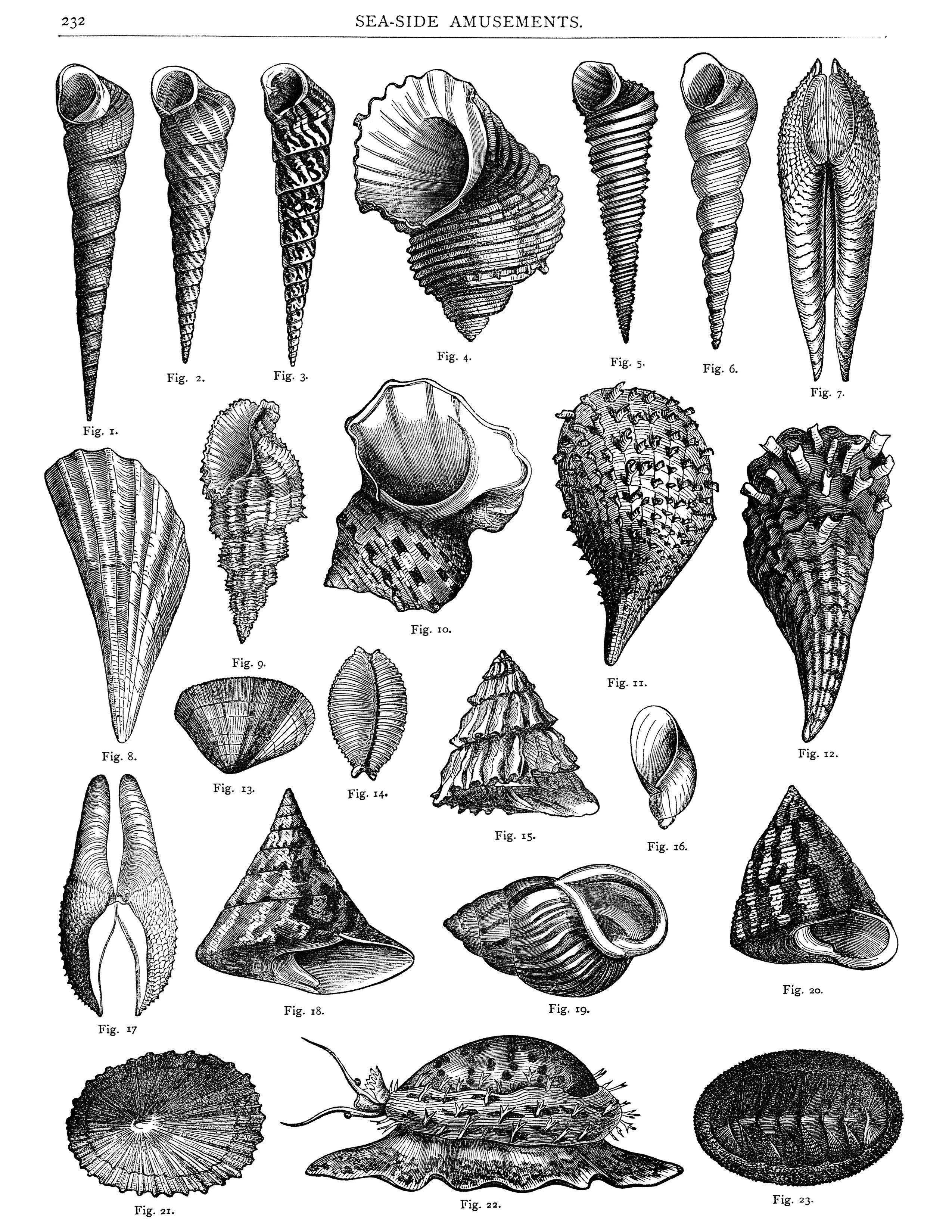 Shell pattern clipart victorian banner freeuse stock sea shells clipart, free digital collage sheet, vintage sea ... banner freeuse stock