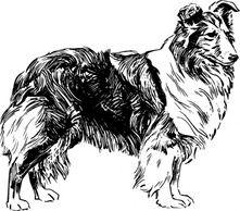 Sheltie clipart black and white stock Sheltie | Vintage Clipart | Dog clip art, Shetland sheepdog ... black and white stock