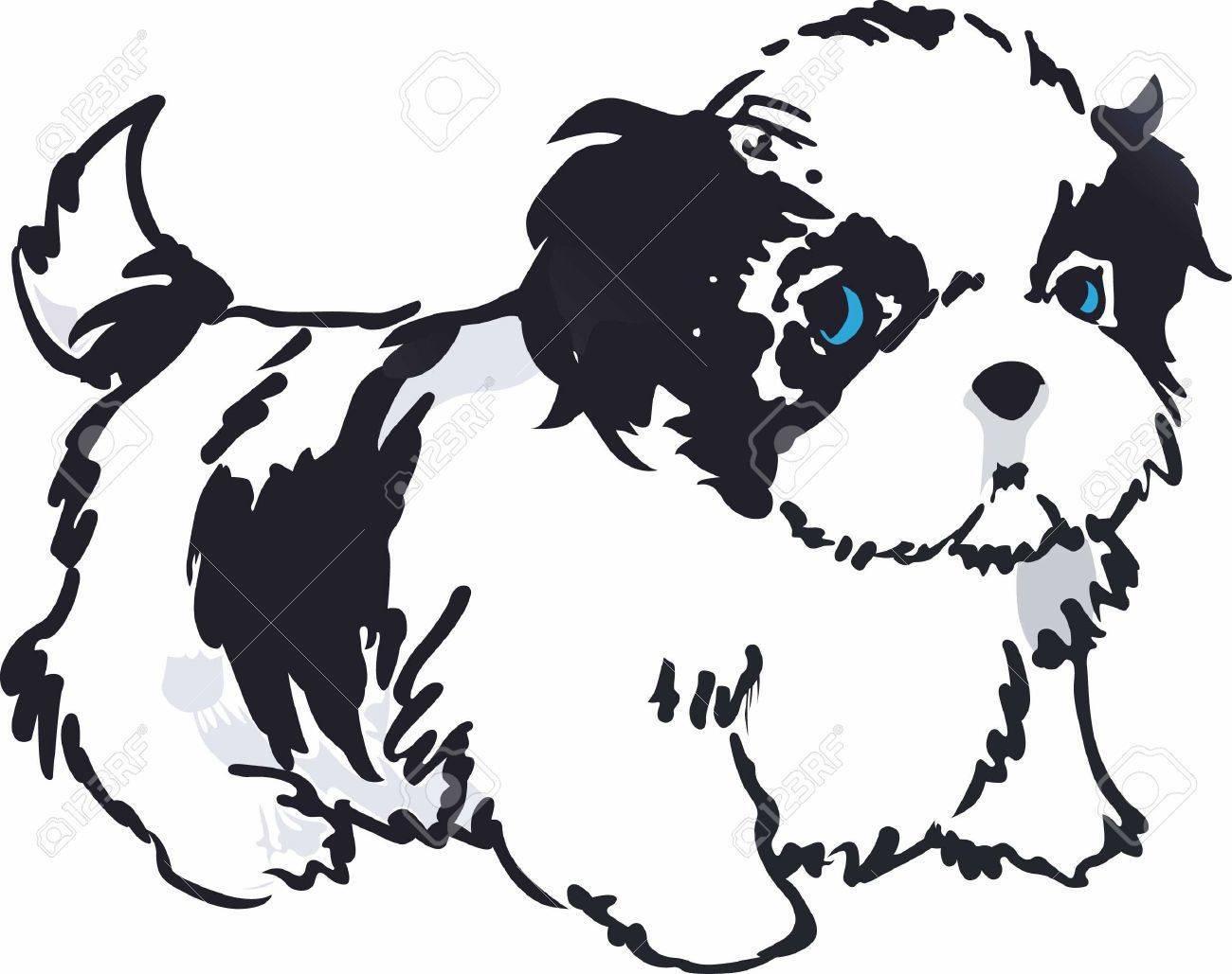 Shih tzu puppies clipart banner free Shih tzu clipart black and white 3 » Clipart Portal banner free