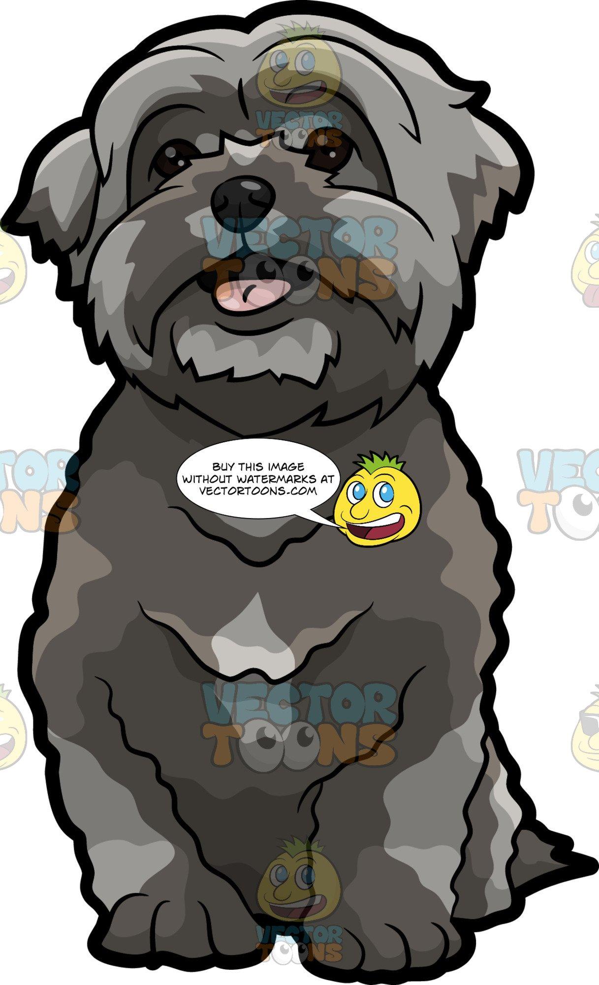 Shih tzu puppies clipart clip black and white download A Super Cute Shih Tzu Puppy clip black and white download