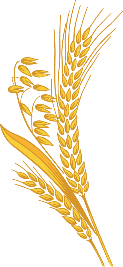 Shock of wheat clipart with transparent background graphic transparent stock Wheat clipart transparent background, Wheat transparent ... graphic transparent stock