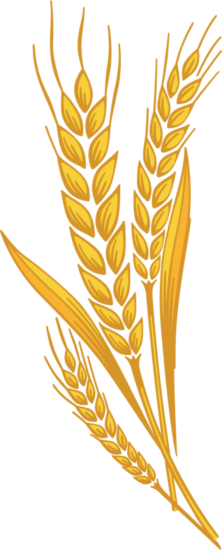 Shock of wheat clipart with transparent background svg freeuse download Grain clipart printable, Grain printable Transparent FREE ... svg freeuse download