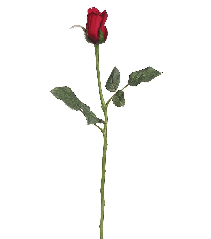 Short stem rose clipart svg transparent Bloom Room 22.5\