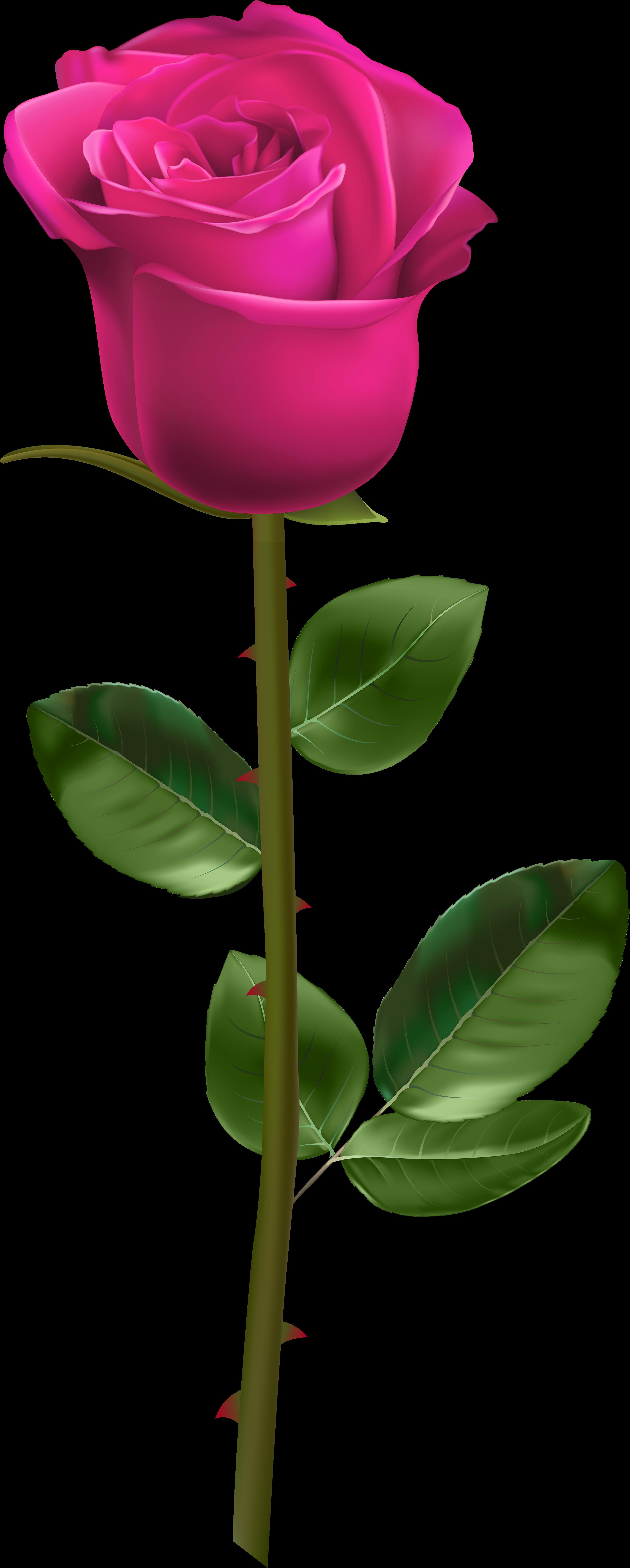 Short stem rose clipart svg freeuse download White Rose With Stem Clipart - Full Size Clipart (#1967460 ... svg freeuse download