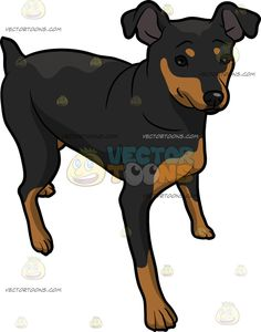 Short tail dog clipart free jpg royalty free stock A Duck Dog Hybrid jpg royalty free stock