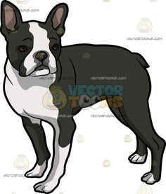 Short tail dog clipart free vector royalty free stock A Brave Looking American Staffordshire Terrier Pet Dog | Posts ... vector royalty free stock