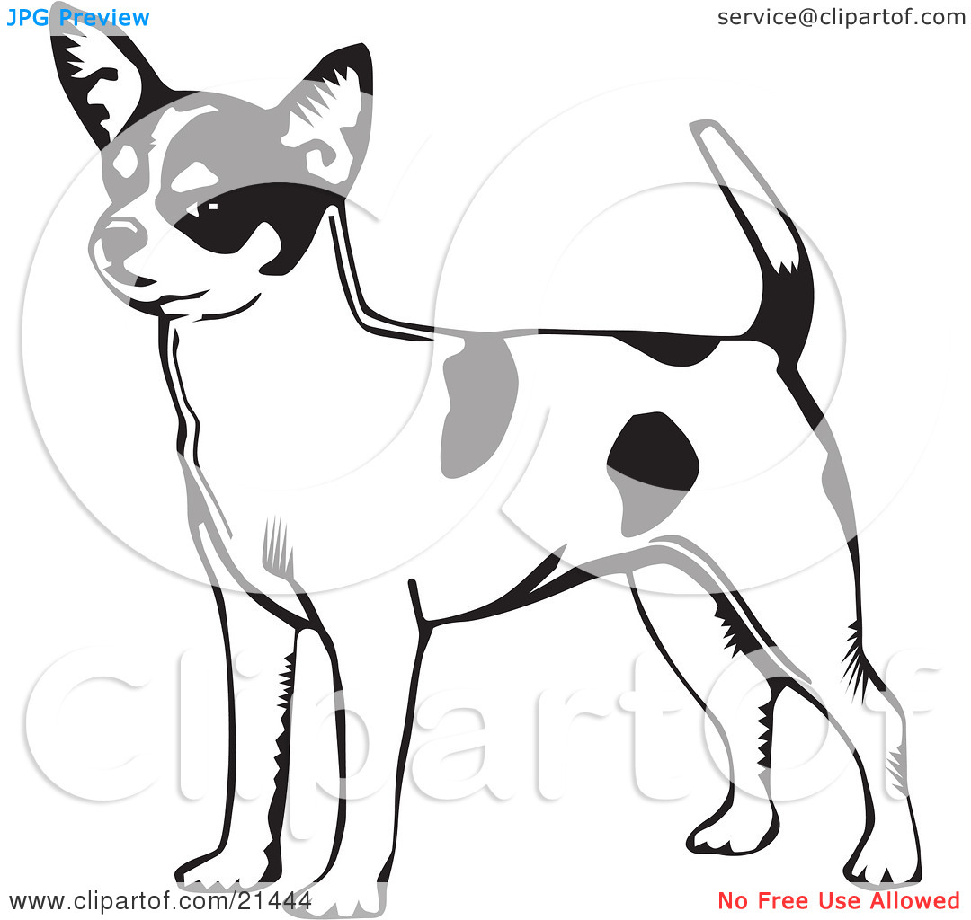Short tail dog clipart free vector stock Clipart Illustration of an Alert Short Haired Chihuahua Dog With A ... vector stock