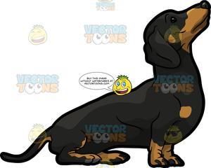 Short weiner dog clipart image free A Friendly Dachshund Dog image free