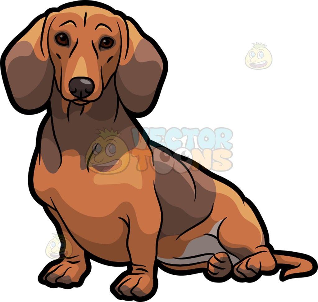 Short weiner dog clipart vector royalty free An adorable Dachshund dog sitting down 1 | dachshund door ... vector royalty free