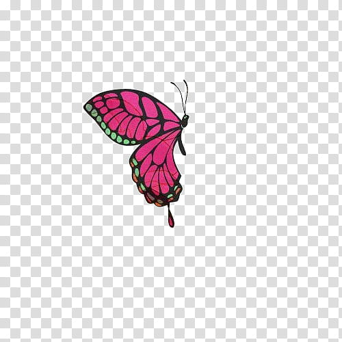 Shoujo clipart image transparent download Shoujo, pink, black, and green butterfly illustration ... image transparent download