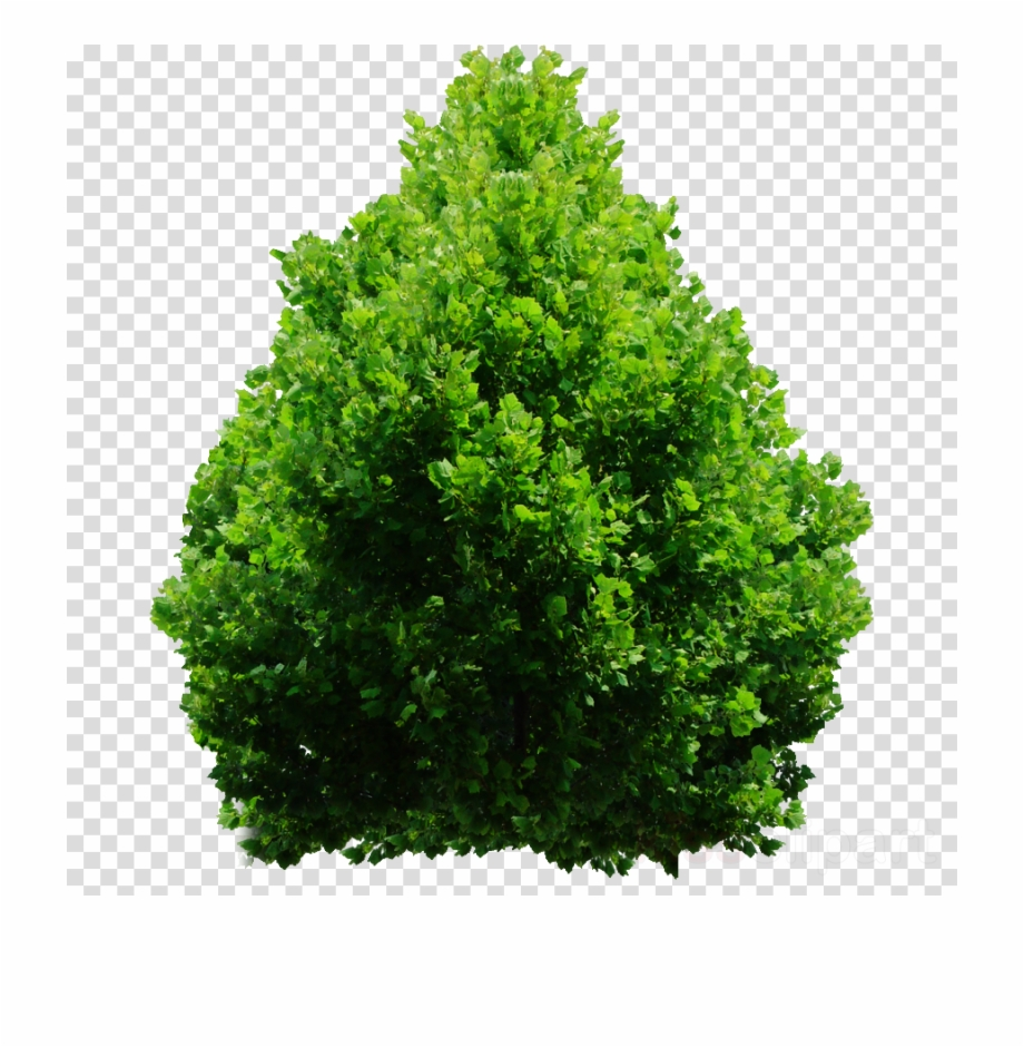 Shurbs clipart svg royalty free library Download Shrub Png Clipart Shrub Clip Art Tree Grass ... svg royalty free library