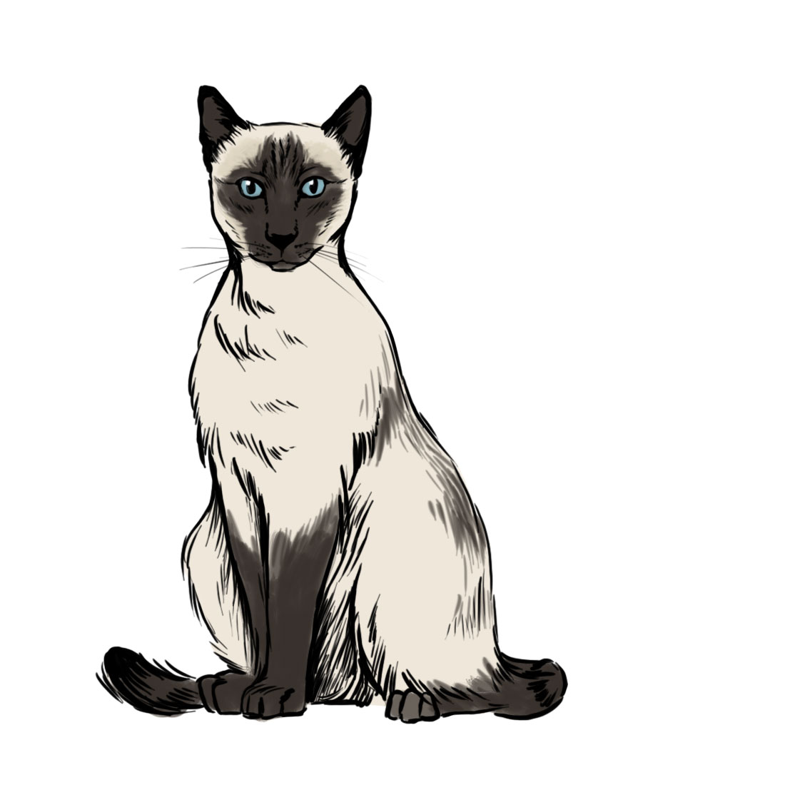 Syamese cat clipart png freeuse stock Free Siamese Cat Clipart, Download Free Clip Art, Free Clip ... png freeuse stock