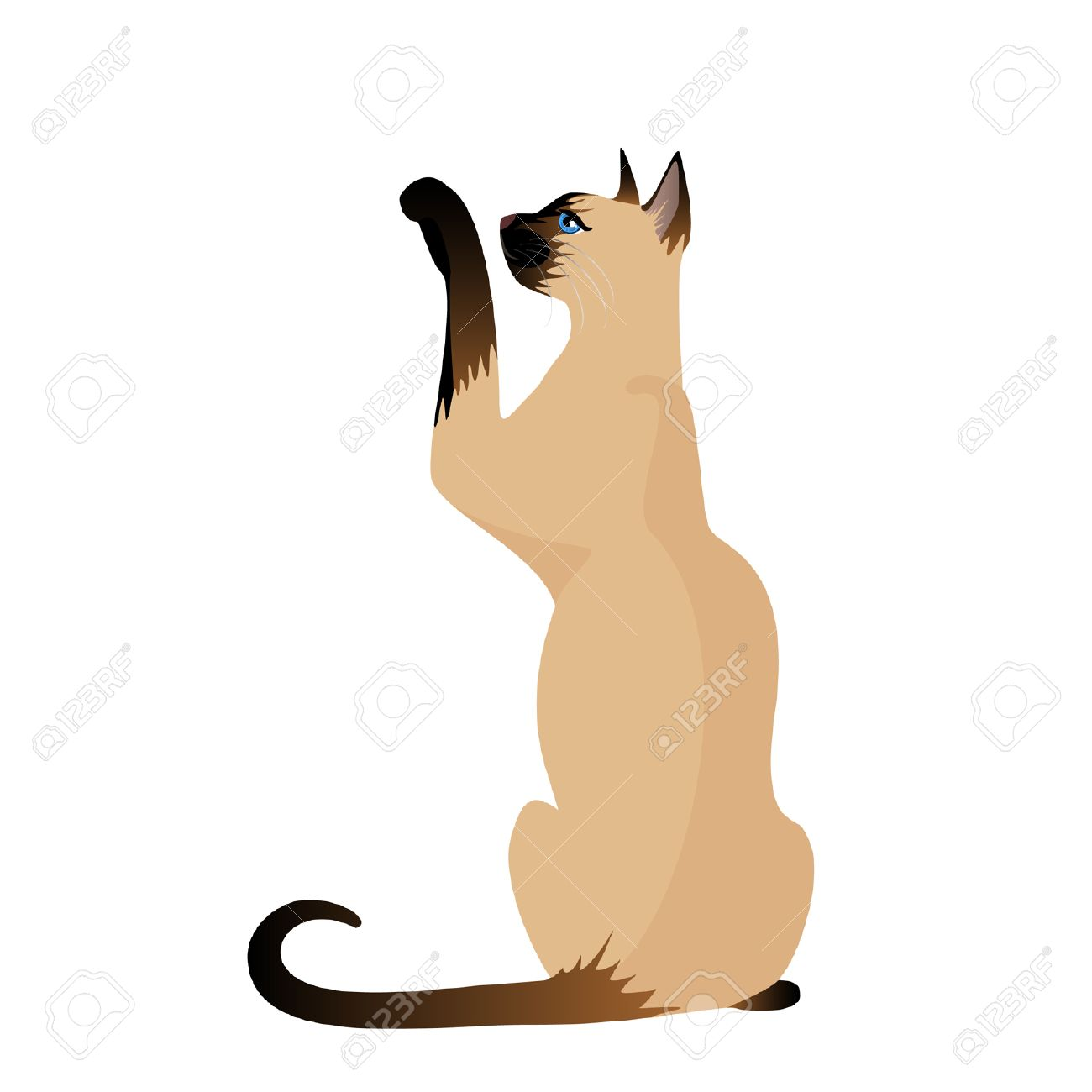 Siamese cat animated clipart picture royalty free download Siamese Cat Clipart | Free download best Siamese Cat Clipart ... picture royalty free download