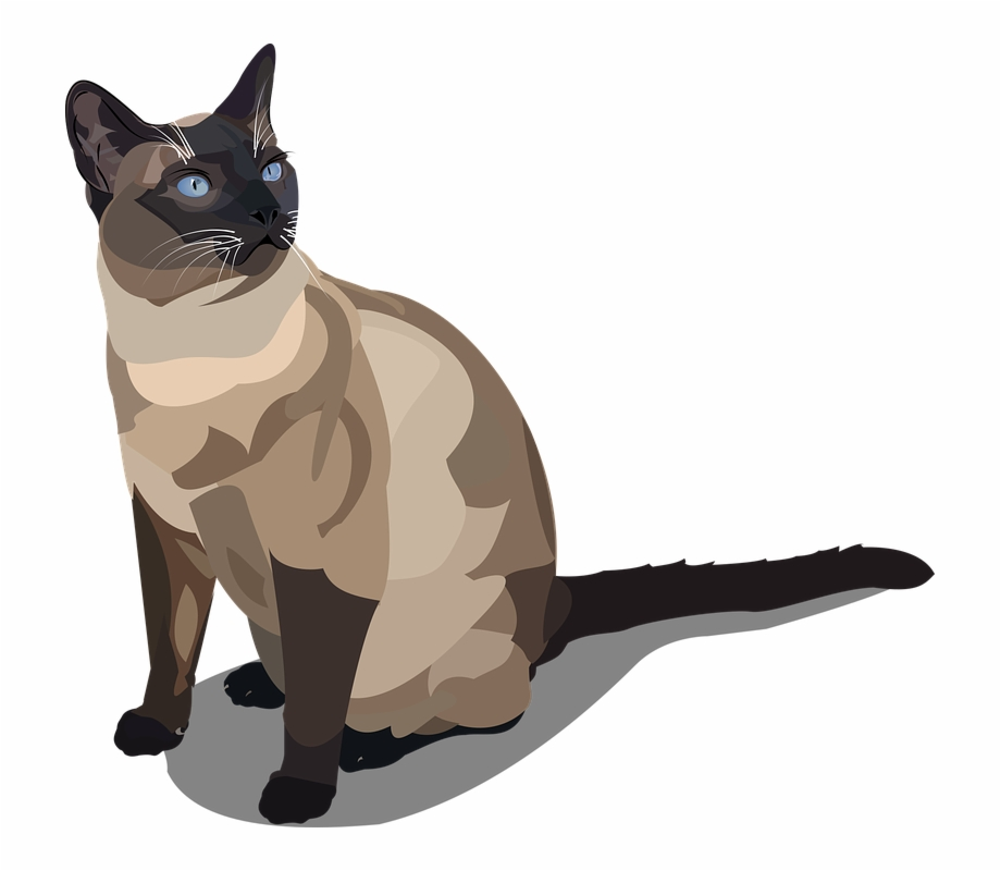 Siamese cat animated clipart clip art royalty free library Cat Siam Cat Breed Pet Animal - Cartoon Siamese Cat Png Free ... clip art royalty free library
