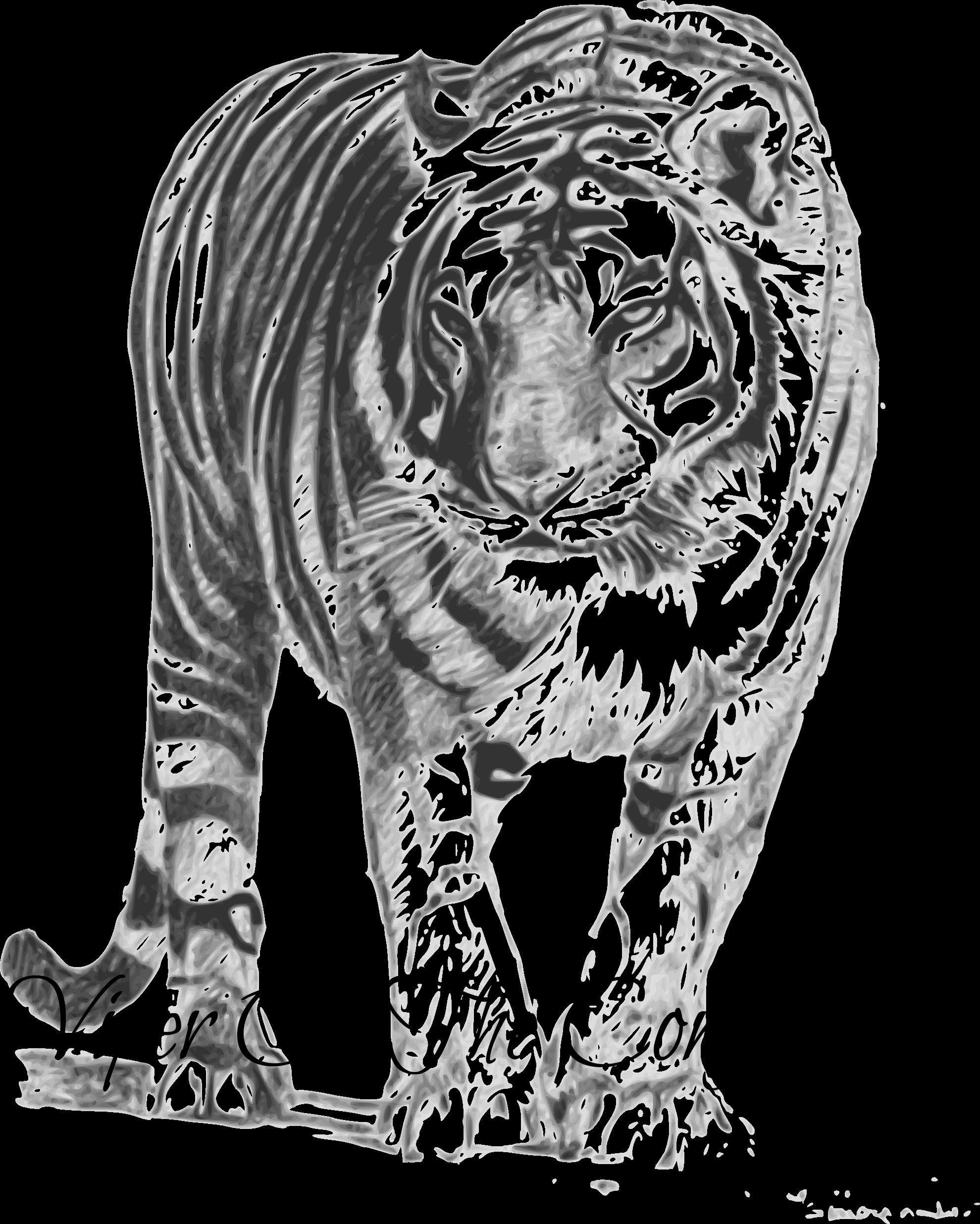 Siberian cat clipart picture transparent stock Image - Bengal-tiger-png-154-k-bengal-tiger-555px-png-325-k-bengal ... picture transparent stock