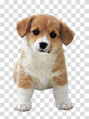 Siberian dalmation clipart png royalty free Dalmatian dog Shar Pei Pembroke Welsh Corgi Puppy, dogs ... png royalty free