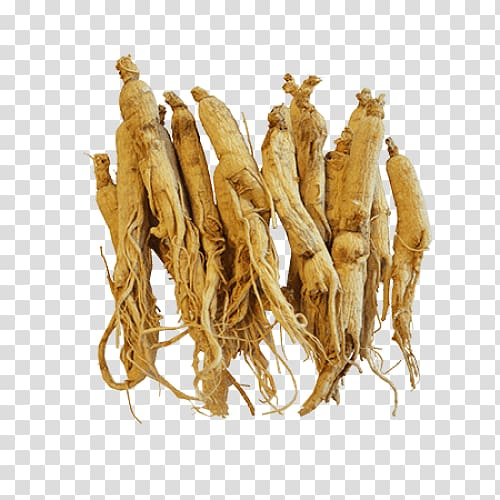 Siberian ginseng clipart clip art black and white download Ginseng lot, Female ginseng Asian Ginseng American ginseng ... clip art black and white download