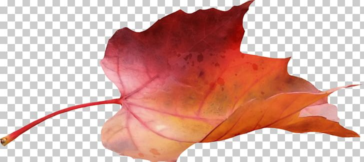 Side tree with fall leaves clipart clip art royalty free Maple Leaf Side View PNG, Clipart, Maple Leaves, Nature Free ... clip art royalty free