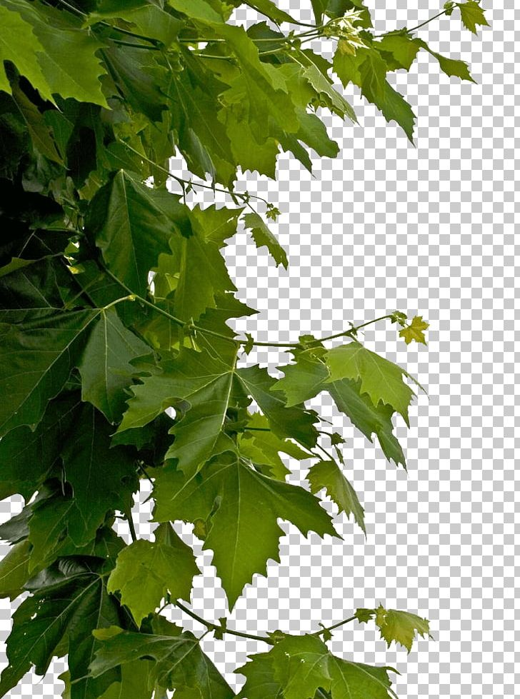 Side tree with fall leaves clipart free download Leaves Side Decoration PNG, Clipart, Leaves, Nature Free PNG ... free download