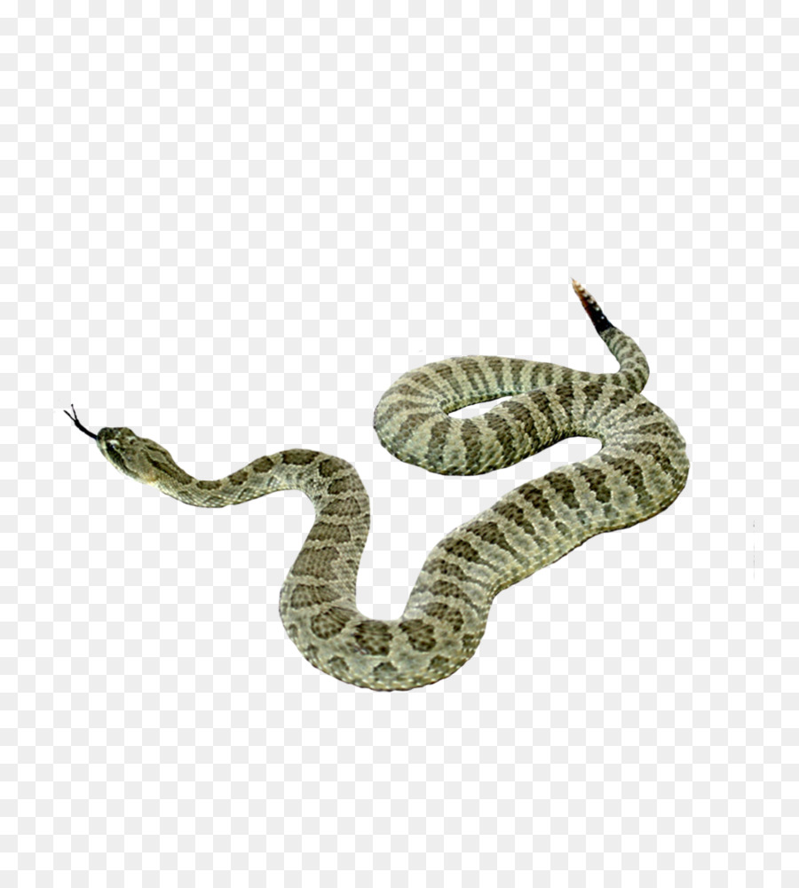 Sidewinder clipart clip royalty free Snake Cartoon clipart - Snake, transparent clip art clip royalty free