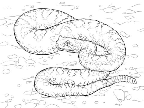 Sidewinder clipart picture free library Sonoran Desert Sidewinder coloring page | Free Printable ... picture free library