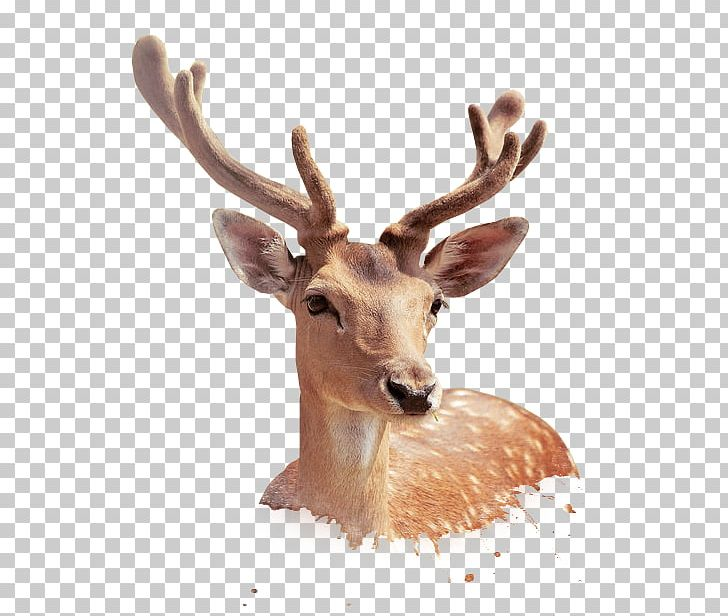 Sika deer clipart clipart freeuse library Sika Deer PNG, Clipart, Animal, Animals, Antler, Christmas ... clipart freeuse library