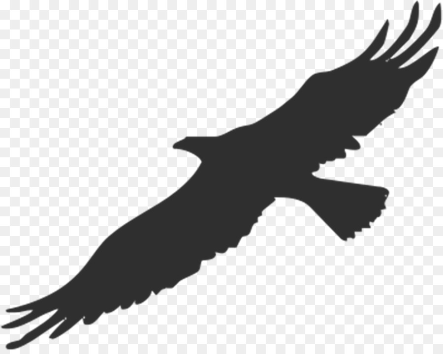 Silhouette eagle clipart jpg freeuse library Eagle Bird clipart - Bird, Drawing, Silhouette, transparent ... jpg freeuse library