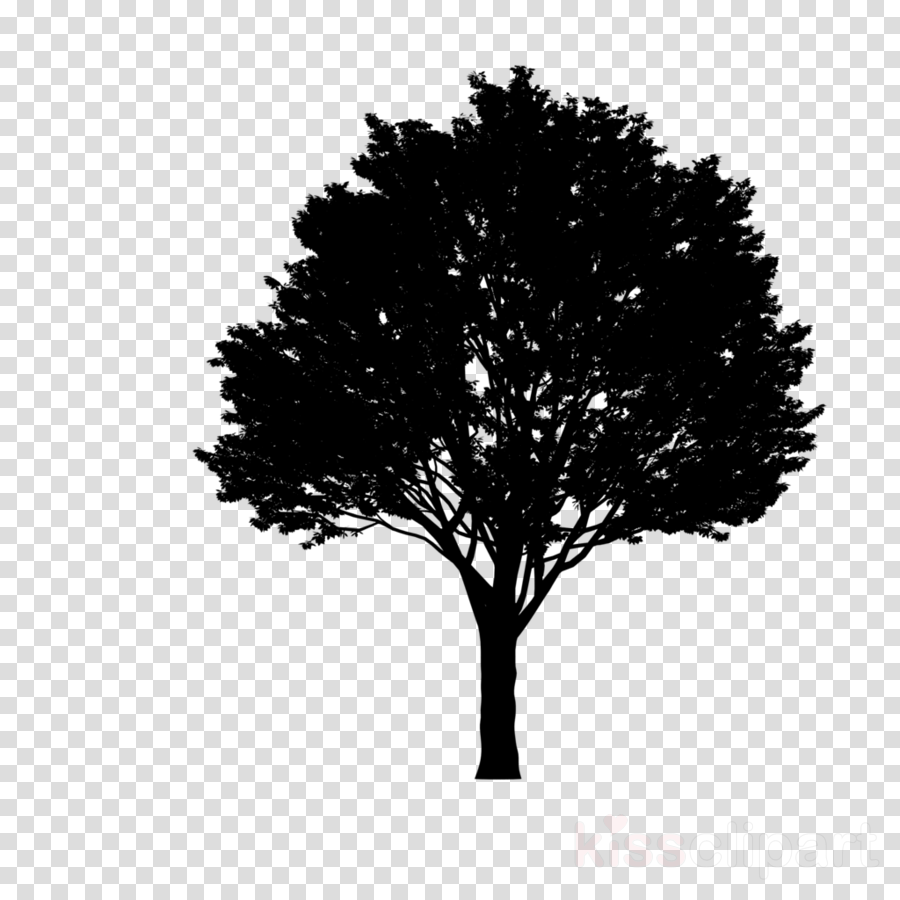 Silhouette maple trees clipart png download Red Maple Tree clipart - Tree, Silhouette, Plant ... png download
