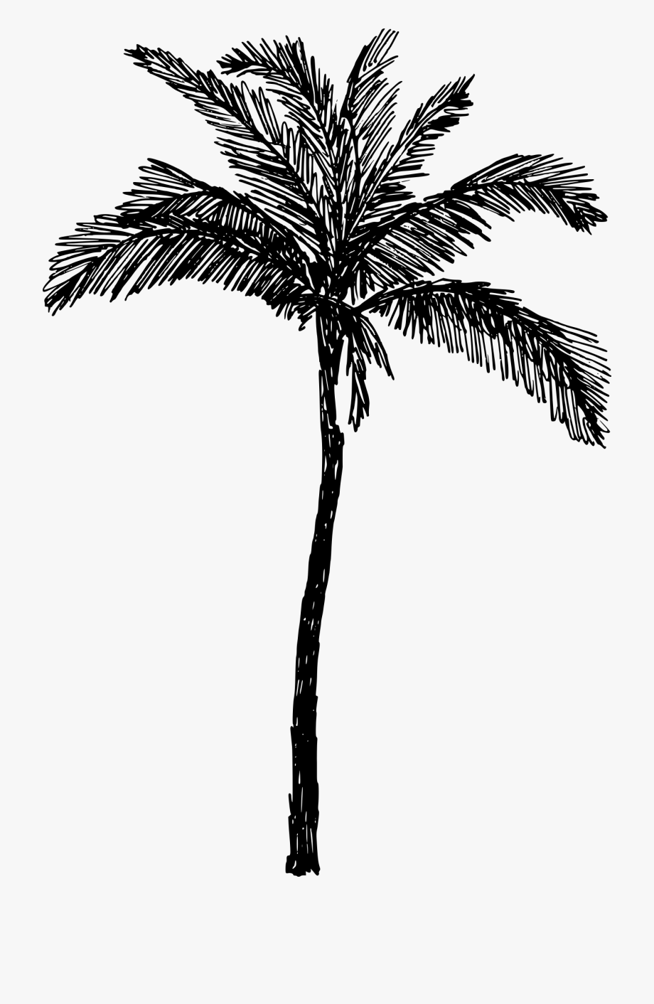 Sillhouette clipart line art image black and white stock Palm Trees Drawing Clip Art Line Art Coconut - Palm Tree Png ... image black and white stock