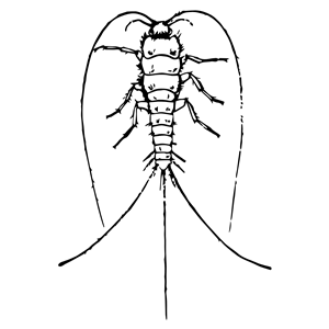 Silverfish clipart image library download silverfish clipart, cliparts of silverfish free download ... image library download