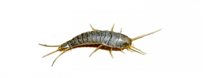 Silverfish clipart clipart freeuse download Silverfish Png Vector, Clipart, PSD - peoplepng.com clipart freeuse download