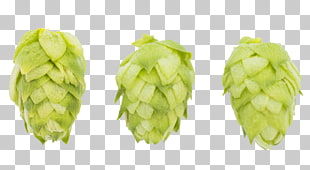 Simcoe hop clipart clip transparent library 6 ych Hops PNG cliparts for free download | UIHere clip transparent library