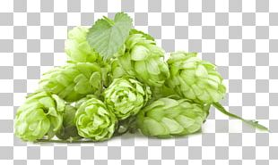 Simcoe hop clipart svg free stock Beer Amarillo Hops Cascade Ale Lager PNG, Clipart, Ale ... svg free stock