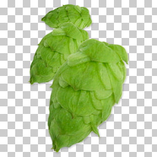 Simcoe hop clipart banner 6 ych Hops PNG cliparts for free download | UIHere banner