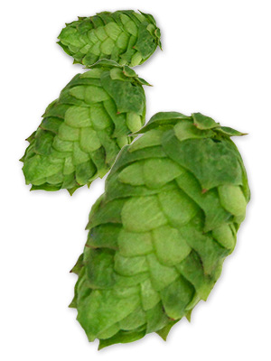 Simcoe hop clipart image royalty free library Hop cones clipart images gallery for free download | MyReal ... image royalty free library
