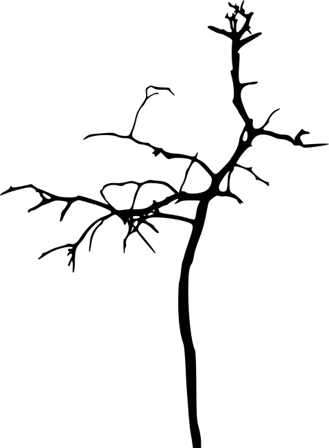 Simple bare tree clipart graphic free download simple bare tree silhouette png - Free PNG Images | TOPpng graphic free download