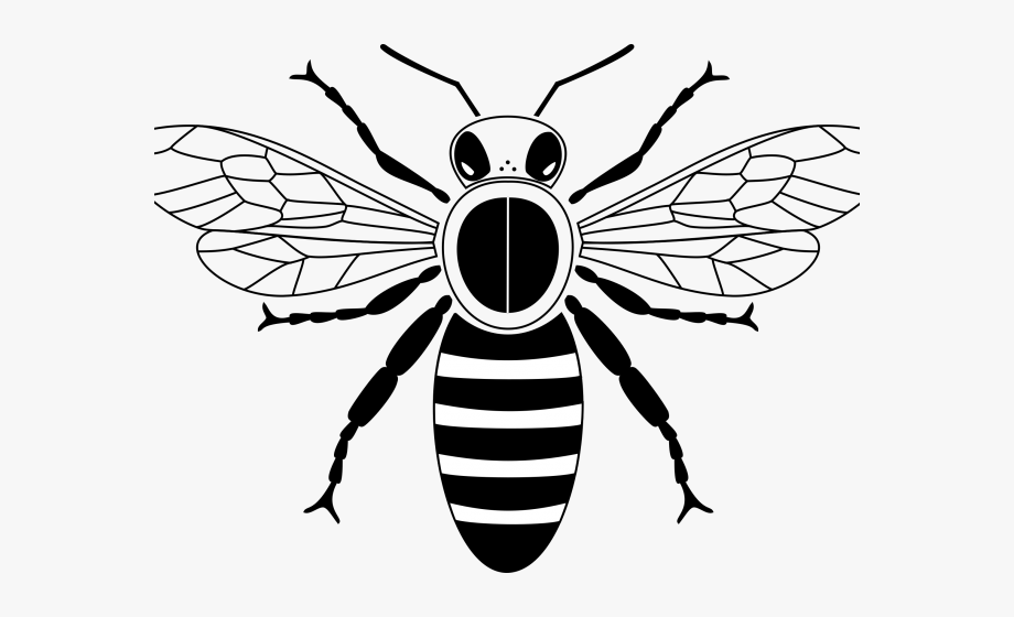 Simple bee clipart vector transparent library Bees Clipart Simple - Simple Honey Bee Bee Drawing #1286147 ... vector transparent library