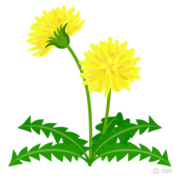 Simple dandelion clipart svg library Dandelion Flower Clipart Free Picture Illustoon svg library