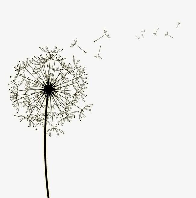 Simple dandelion clipart jpg transparent library Dandelion Leaves Floating Petal Bubble Simple And Elegant ... jpg transparent library