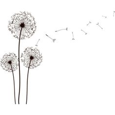 Simple dandelion clipart clipart royalty free stock 14 Best dandelion drawing images in 2018   Flower doodles ... clipart royalty free stock