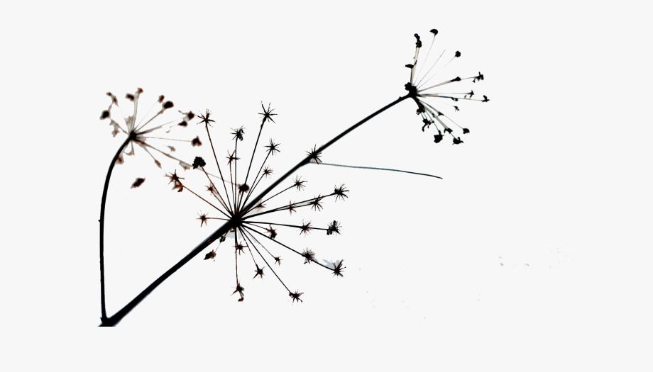 Simple dandelion clipart freeuse stock Dandelion Transparent Simple - Floral Design #895098 - Free ... freeuse stock