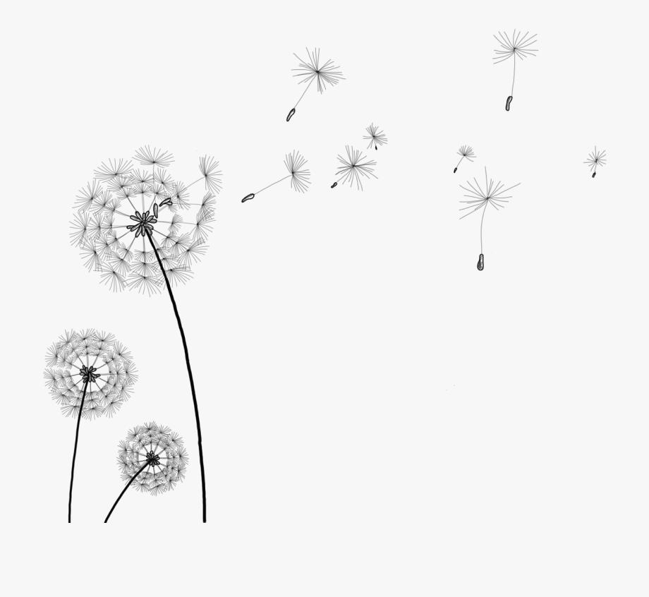 Simple dandelion clipart png Information Clip Art Transprent - Transparent Background ... png