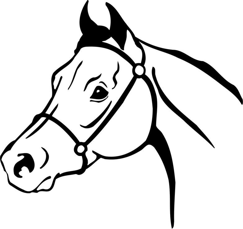 Simple horse face clipart picture black and white Pictures Of Horse Drawings | Free download best Pictures Of ... picture black and white